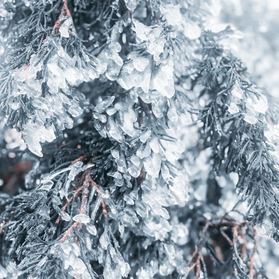 Lá cây và hoa tuyết kết hợp tạo nên một bức tranh tưởng chừng chỉ có tại các nước hàn đới.
